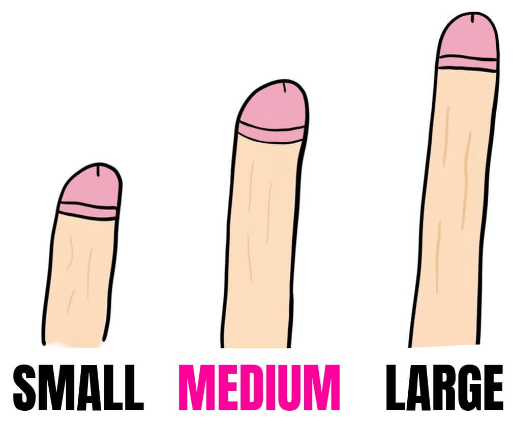 cartoon penis of different sizes